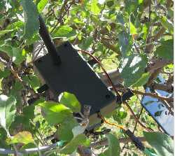 Leaf Sensor Wireless Solar Remote Node
